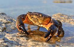 stone-crab-21192237